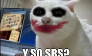 Joker cat. Why so serious?