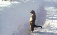Standing cat. Who stole my newspaper?