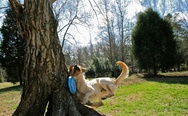 Dog and a frisbee, and a tree