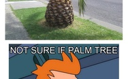 Not sure if palm tree or just giant pineapple