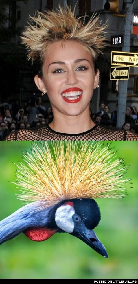 Miley Cyrus and crowned crane