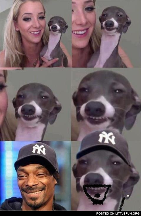 Snoop Dog is a real dog