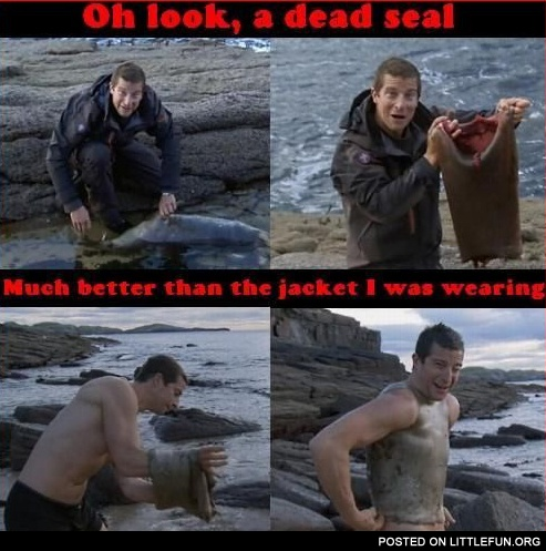 Bear Grylls. Oh look, a dead seal! Much better than the jacket I was wearing.