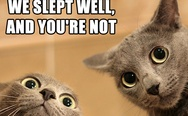Lolcats. We slept well, and you're not.