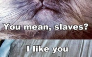 Humans? You mean slaves? Grumpy cats.