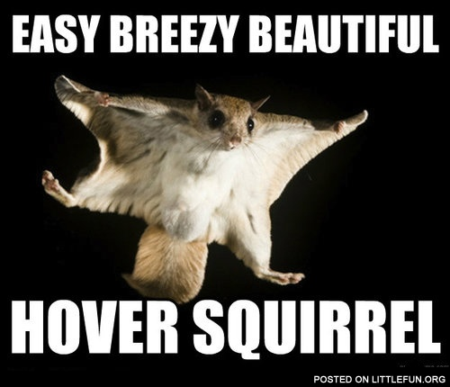 Easy breezy beautiful, hover squirrel