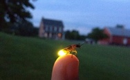 My little brother sent me a picture of a glow-worm