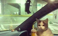 Cat in the car. No time to explain, get in!