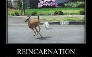 Reincarnation. Hunting cat.