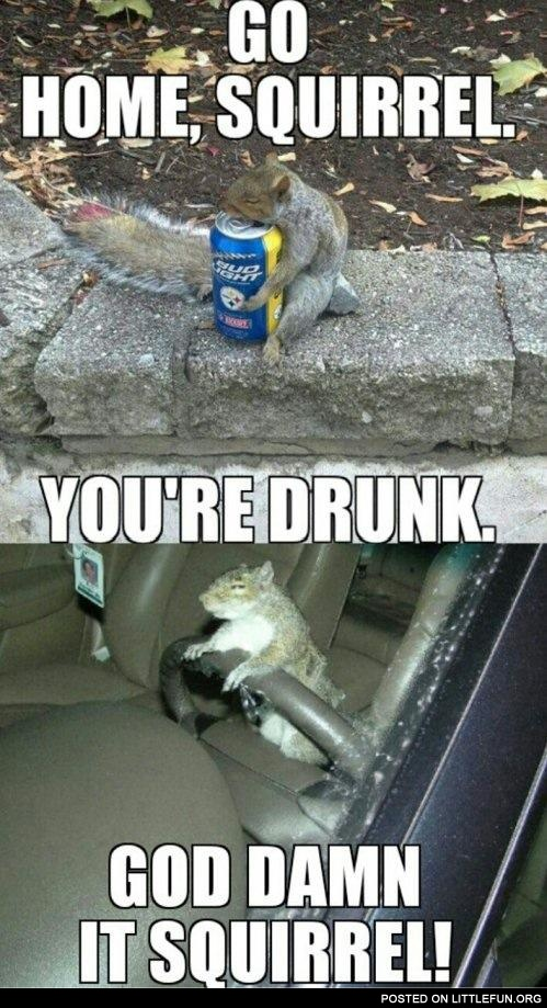Go home squirrel, you are drunk