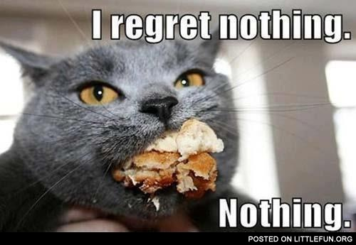 I regret nothing. Cat with food.