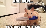 It's payback time. A mouse with a laser pointer.