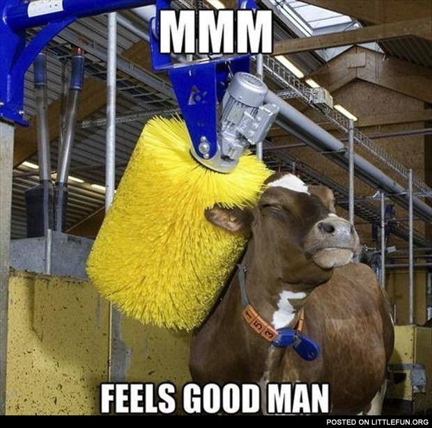 Mmm, feels good man. Happy cow.