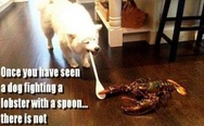 A dog fighting a lobster with a spoon