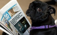 Dog reading the news about Miley Cyrus