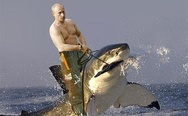 Meanwhile in Russia. Putin on the shark.