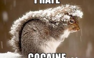 I hate cocaine. Squirrel.