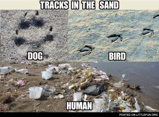 Tracks in the sand: dog, bird, human