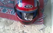 Sleeping cat in a moto helmet
