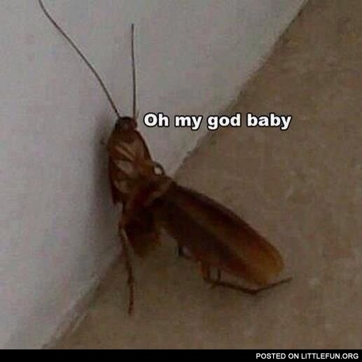 F**king c*ckroaches. Oh my God, baby.