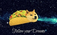 Follow your dream doge
