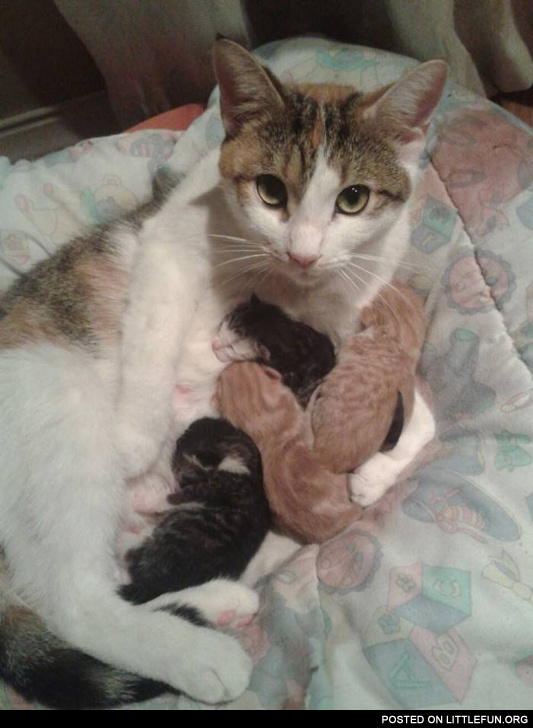 Cat Mom and her sleeping kittens