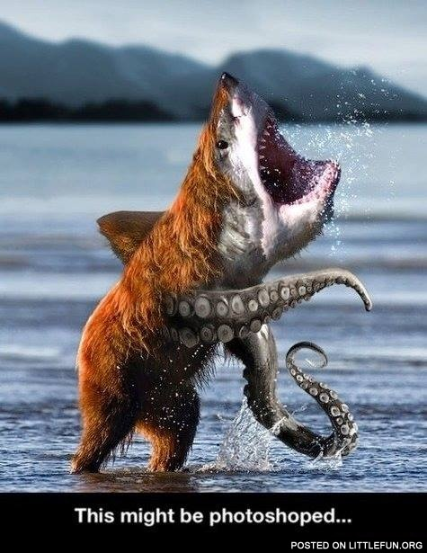 Bear shark octopus. This might be photoshoped.
