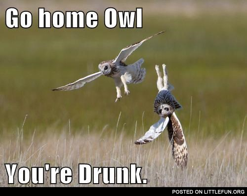 Go home owl, you're drunk