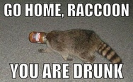 Go home , raccoon, you are drunk