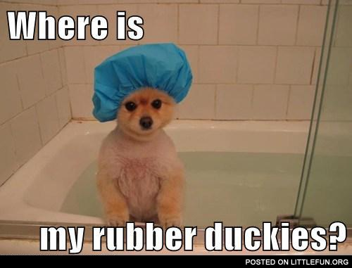 Dog in a bath. Where is my rubber duckies?
