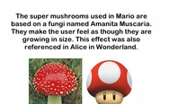 The super mushrooms used in Mario are based on a fungi named Amanita Muscaria