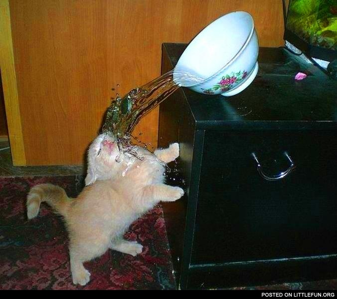 Little kitten with a bowl of water. Fail.