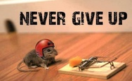 Never give up! A mouse with helmet.