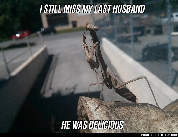 I still miss my last husband, he was delicious