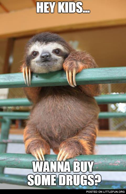 Baby sloth. Hey kids, wanna buy some drugs?