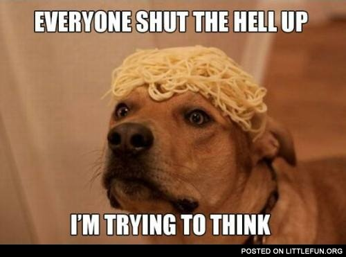 Dog and spaghetti. Everyone shut the hell up, I'm trying to think.