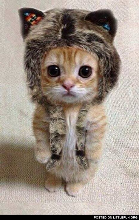 Wolf kitten. Nice hat, though.