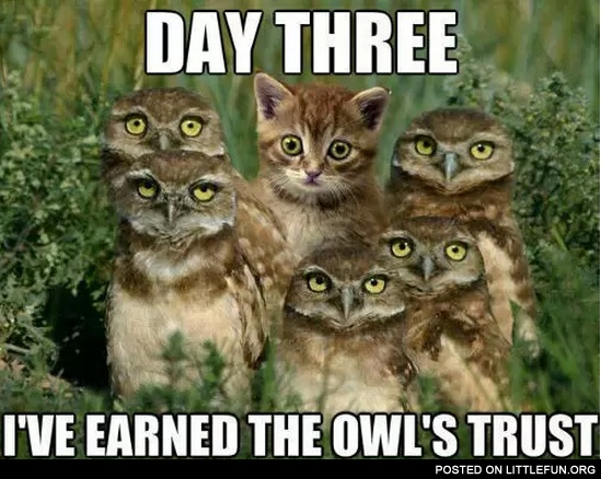 Day three, I've earned the owl's trust