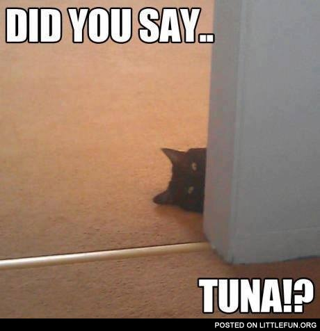 Did you say tuna?
