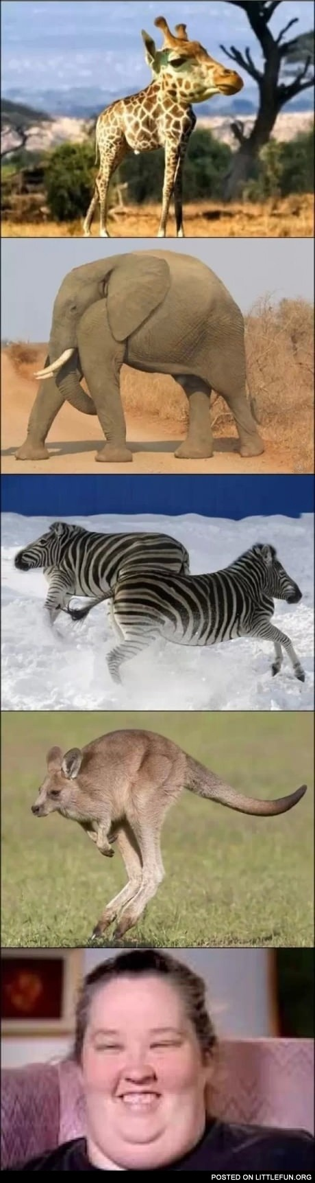 Image of: Images Animals Without Necks Sina English Littlefun Animals Without Necks