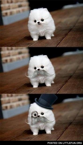 Like a Sir dog