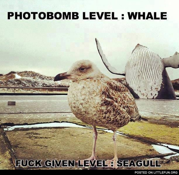 Whale and seagull