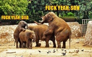 F**k yeah, son. F**k yeah, dad. F**king elephants.