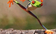 Everybody was kung fu fighting frog