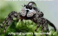 Jumping spiders sometimes wear water droplets as hats