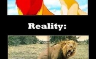 Expectation vs. Reality. Lions.