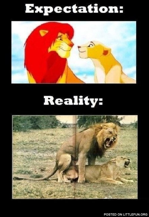 Littlefun Expectation Vs Reality Lions