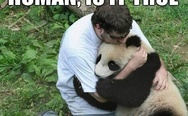Panda hugs. Human, is it true that I am gonna be extinct?