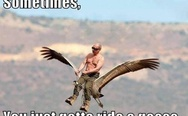 Sometimes you just gotta ride a goose. Well played Mr. Putin