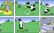 Buni and pet rock